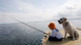 dogs salmon