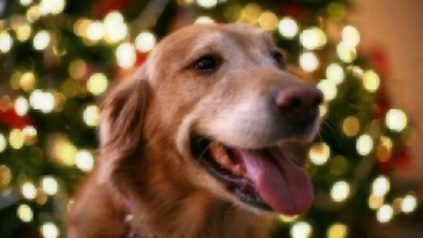holiday dangers pets