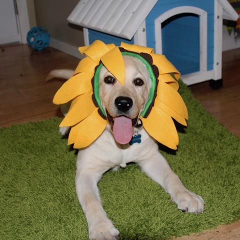 dog as flower halloween costume