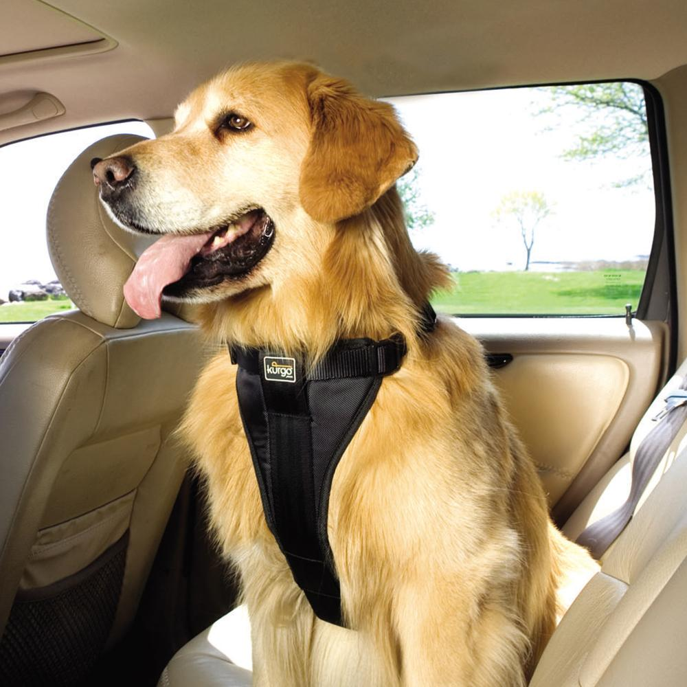 Common Injury in Dogs: Car Accidents | Healthy Paws Pet ...