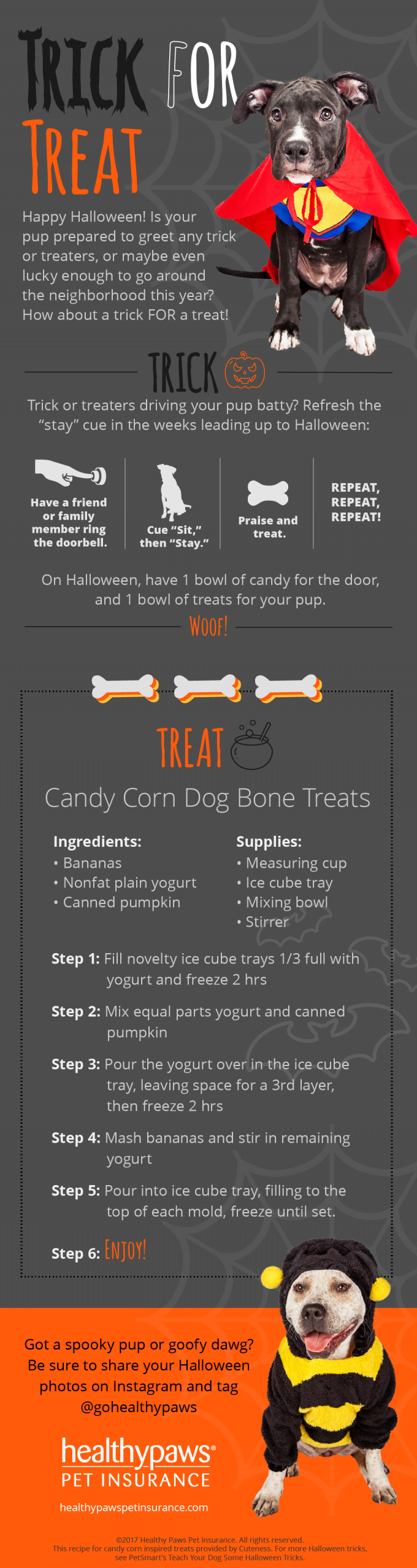 healthy paws halloween