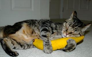 http://www.healthypawspetinsurance.com/blog/wp-content/uploads/Walter_Catnip_Banana_Hug.jpeg
