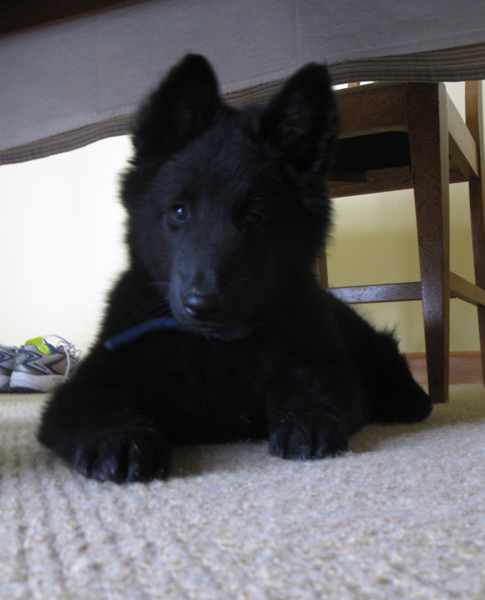 Bear The Dog Adopted