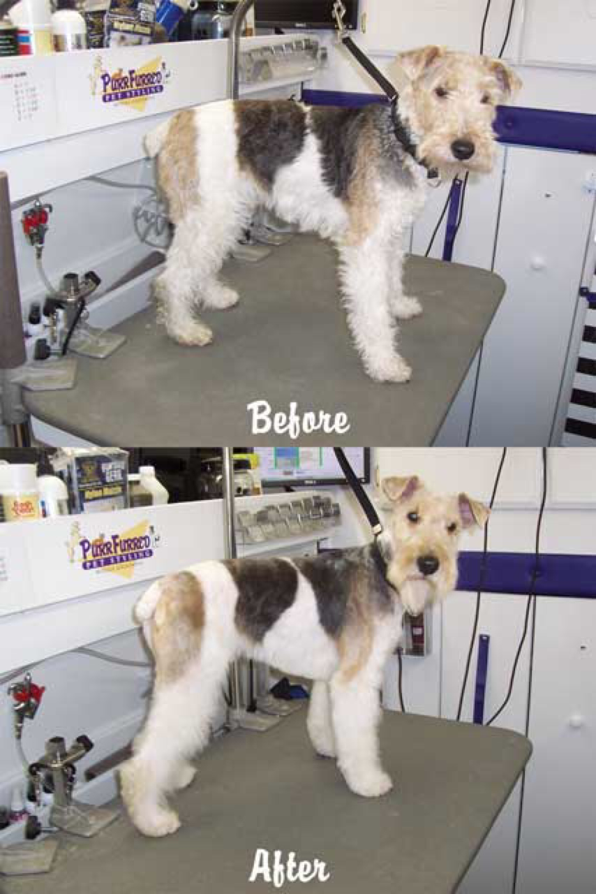mobile dog grooming Chicago