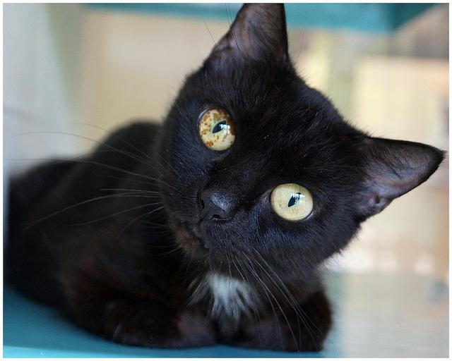 black cat selfie
