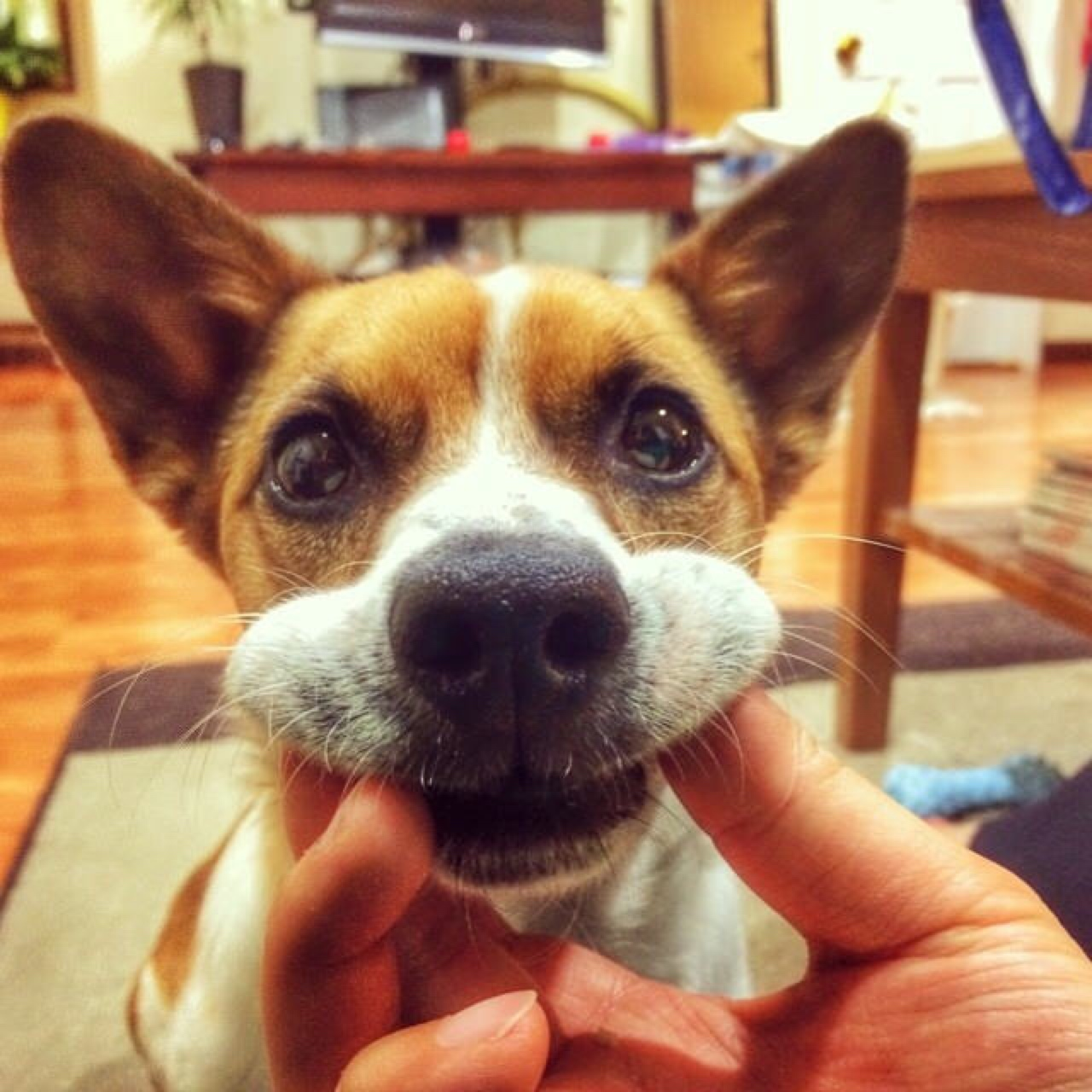 Is Wet Food Bad For Dogs Teeth