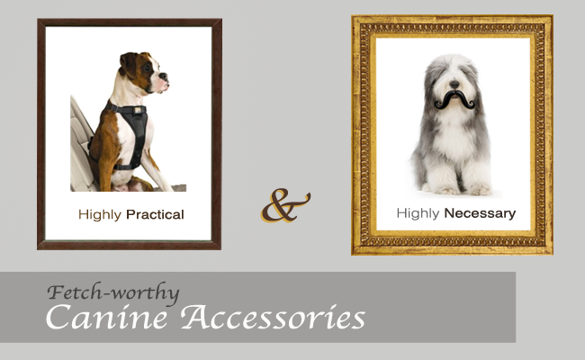 canine_accessories