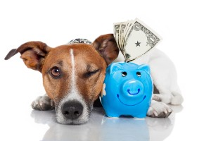 health insurance dogs, pet insurance dogs, economic relief dogs