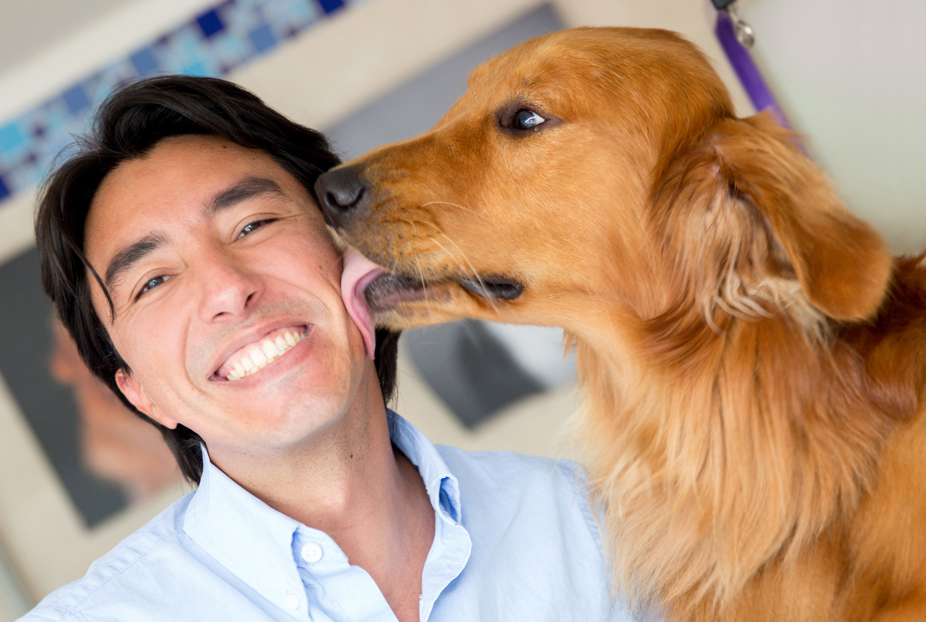 relationship with dogs Here are somethings that you can do today to start to improve the relationship between you and your dog.