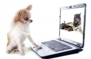 social media dog