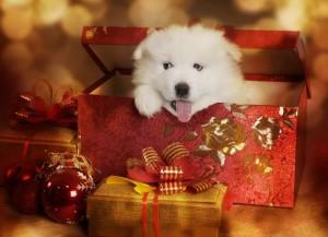 pets for christmas