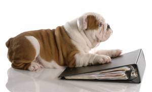 back to school, pet anxiety, separation anxiety, pet routine