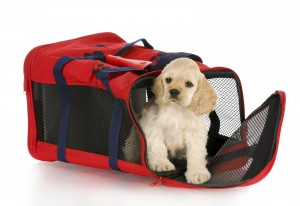 puppy in a carrier
