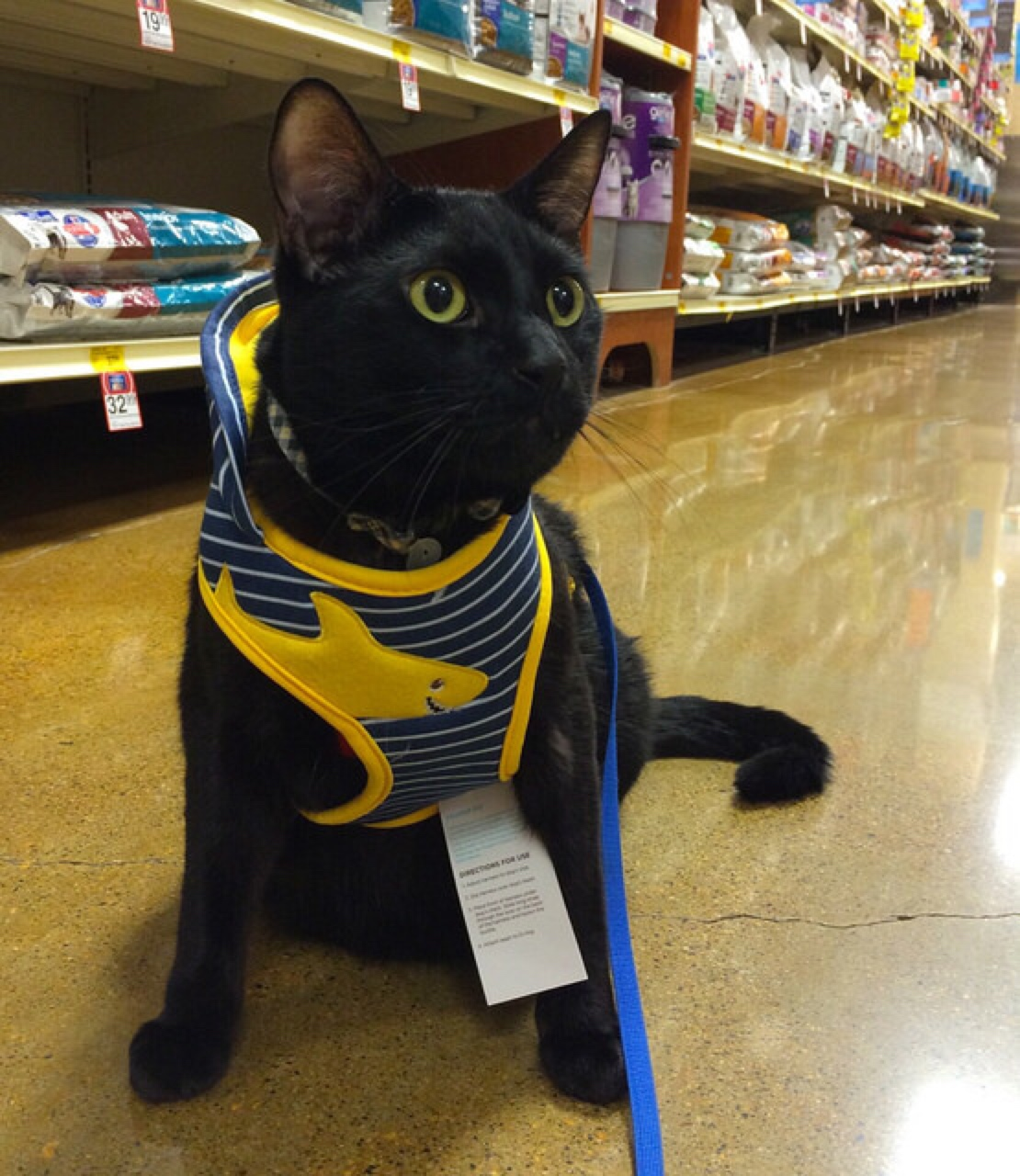 cat leash harness