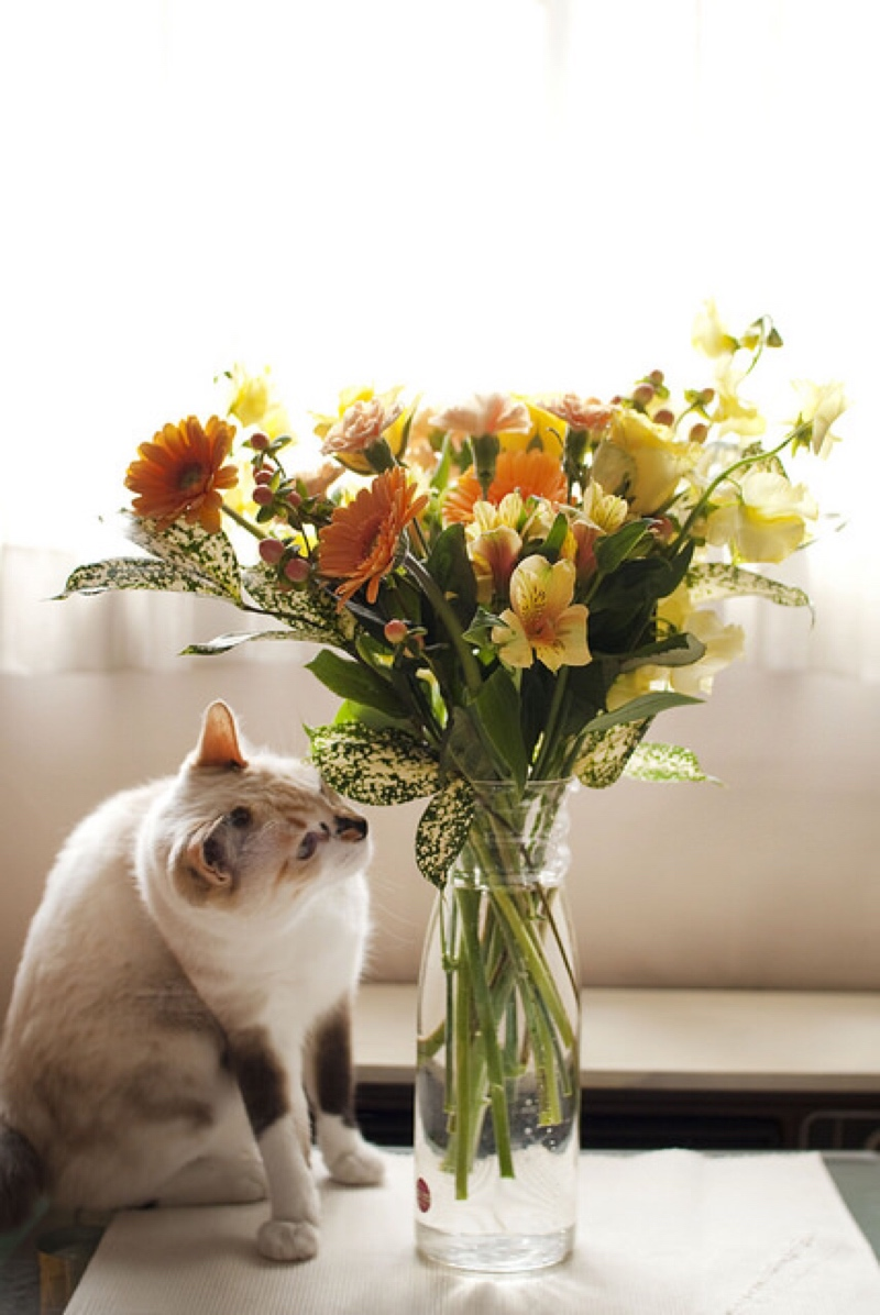13 things you never suspected could poison your pet plants toxic to cats izmirmasajfo