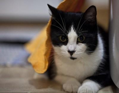 cat wet towel