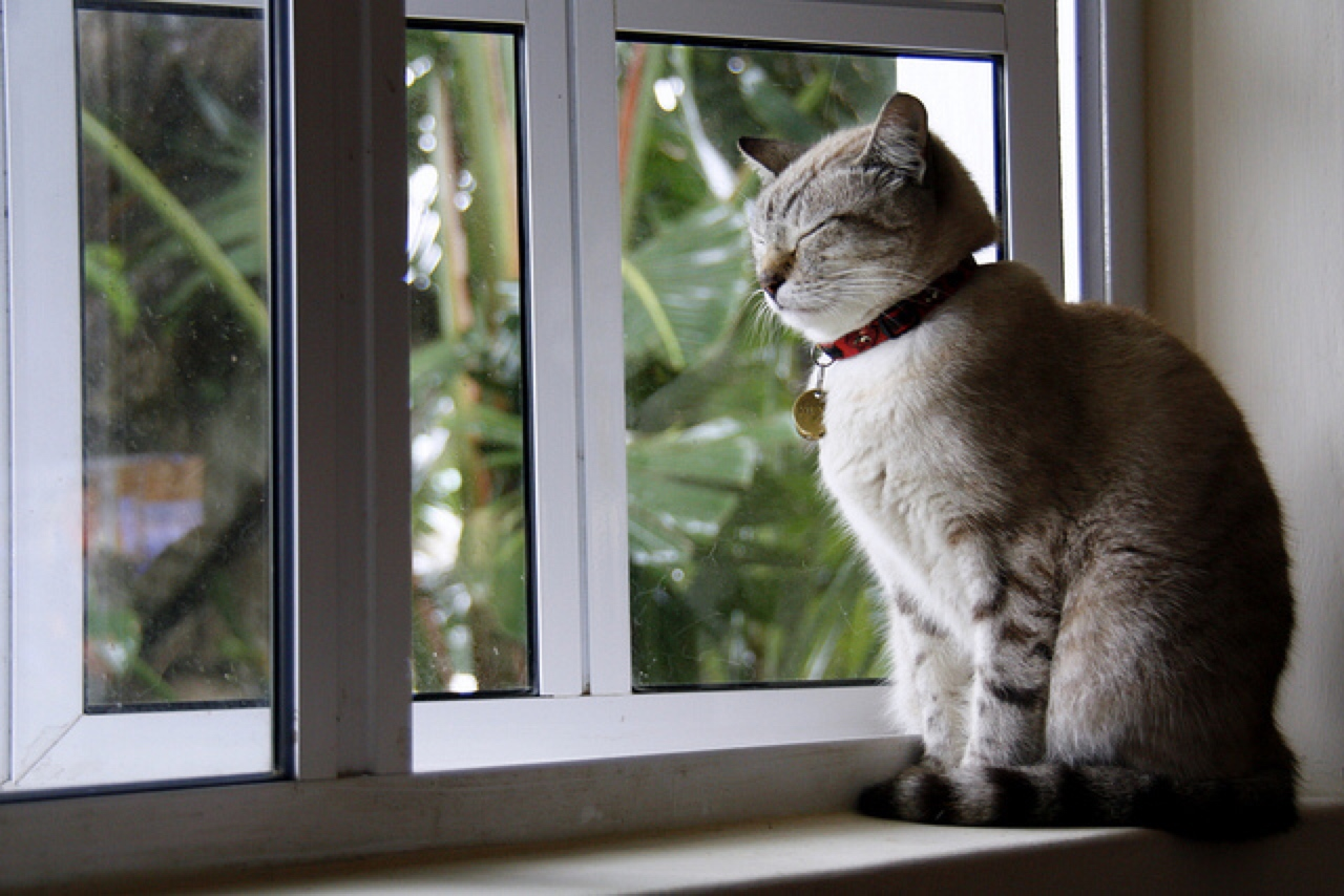 The Best Cat Toys For Your Pet S Personality Healthy