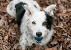 Chaser pet insurance