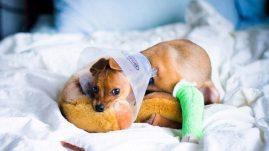 dog bone fractures