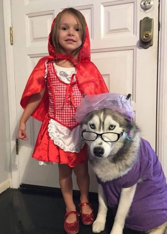 Little Red Riding Hood Halloween costume for dogs and kids
