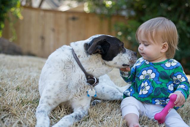 dog baby safety