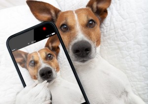 dog selfie pet app