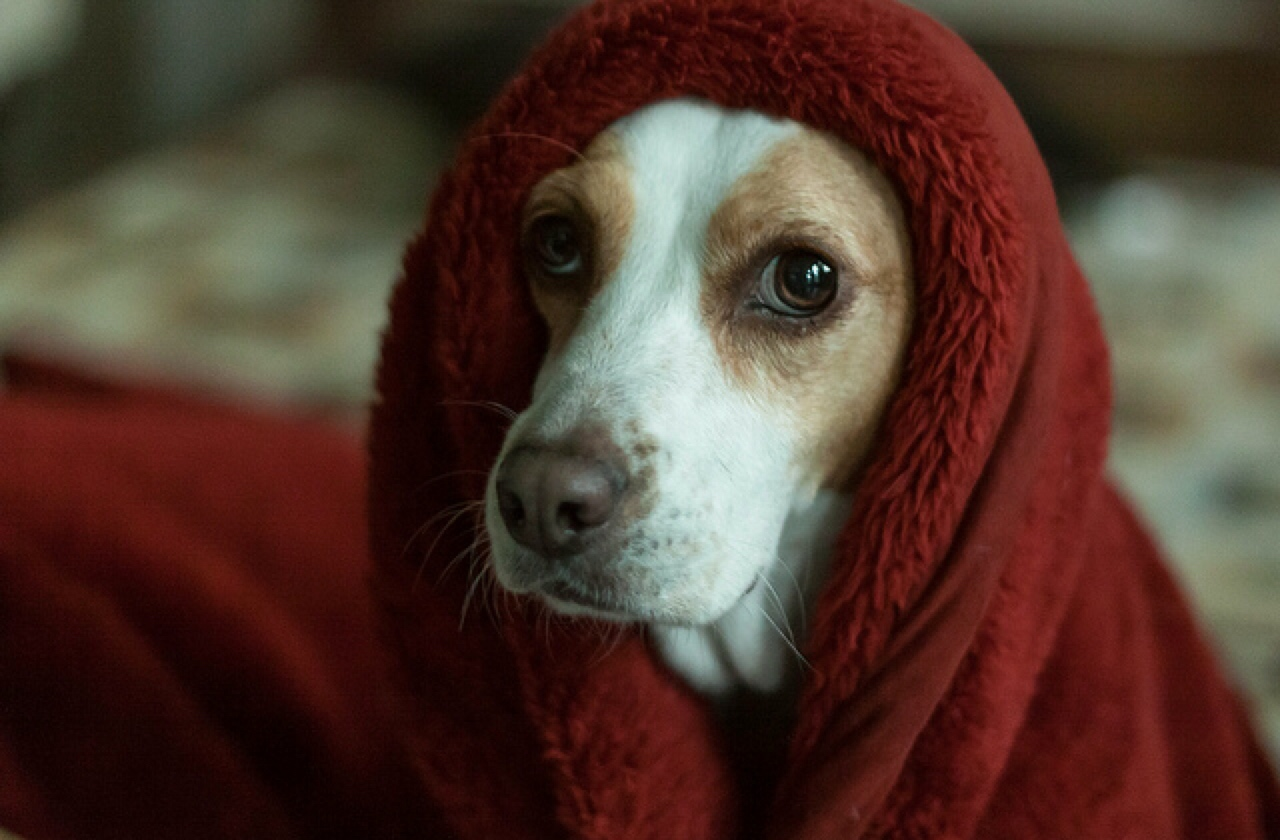 How to Calm Down a Dog | Healthy Paws