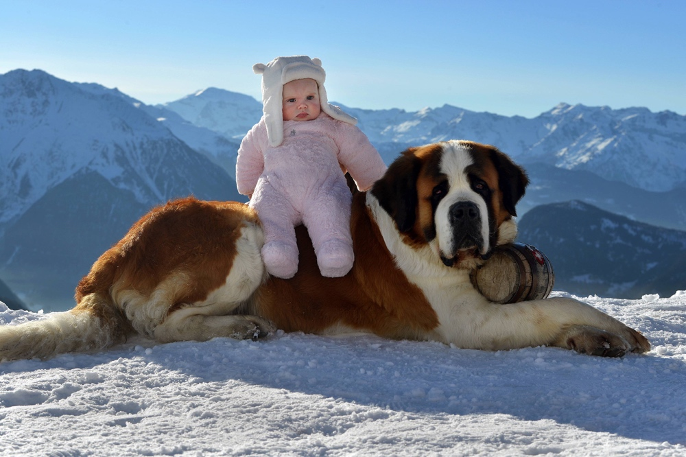 Baby with a St. Bernard