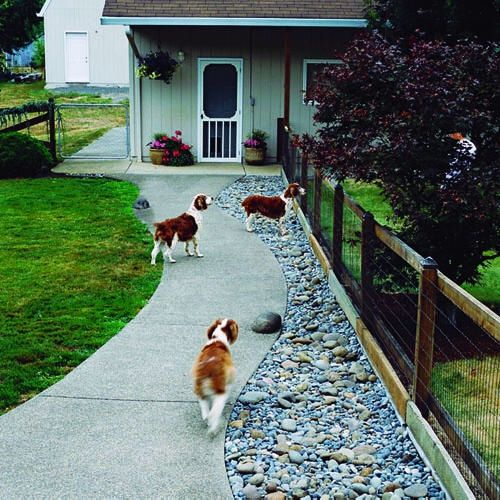 brittany spaniel dogs in yard