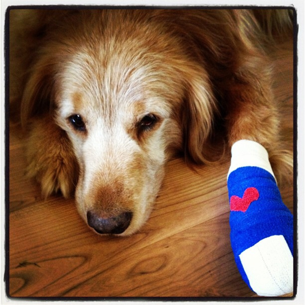 Your Pet First Aid Kit Could Save A Life Healthy Paws