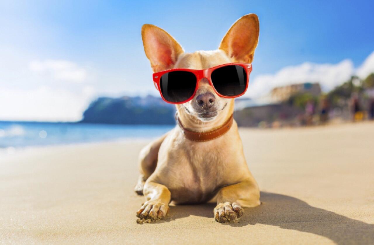 All Natural Dog Sunscreen
