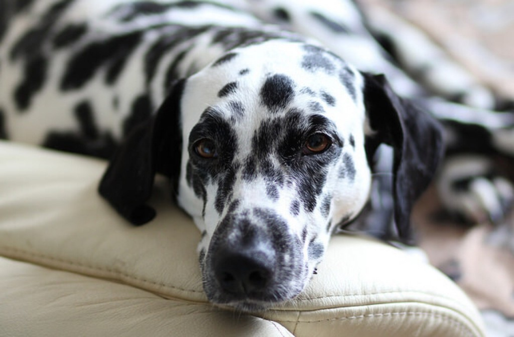 Best Pet Insurance For A Dog That Has Arthritis