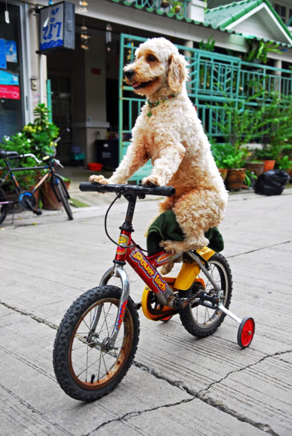 dog bicycle