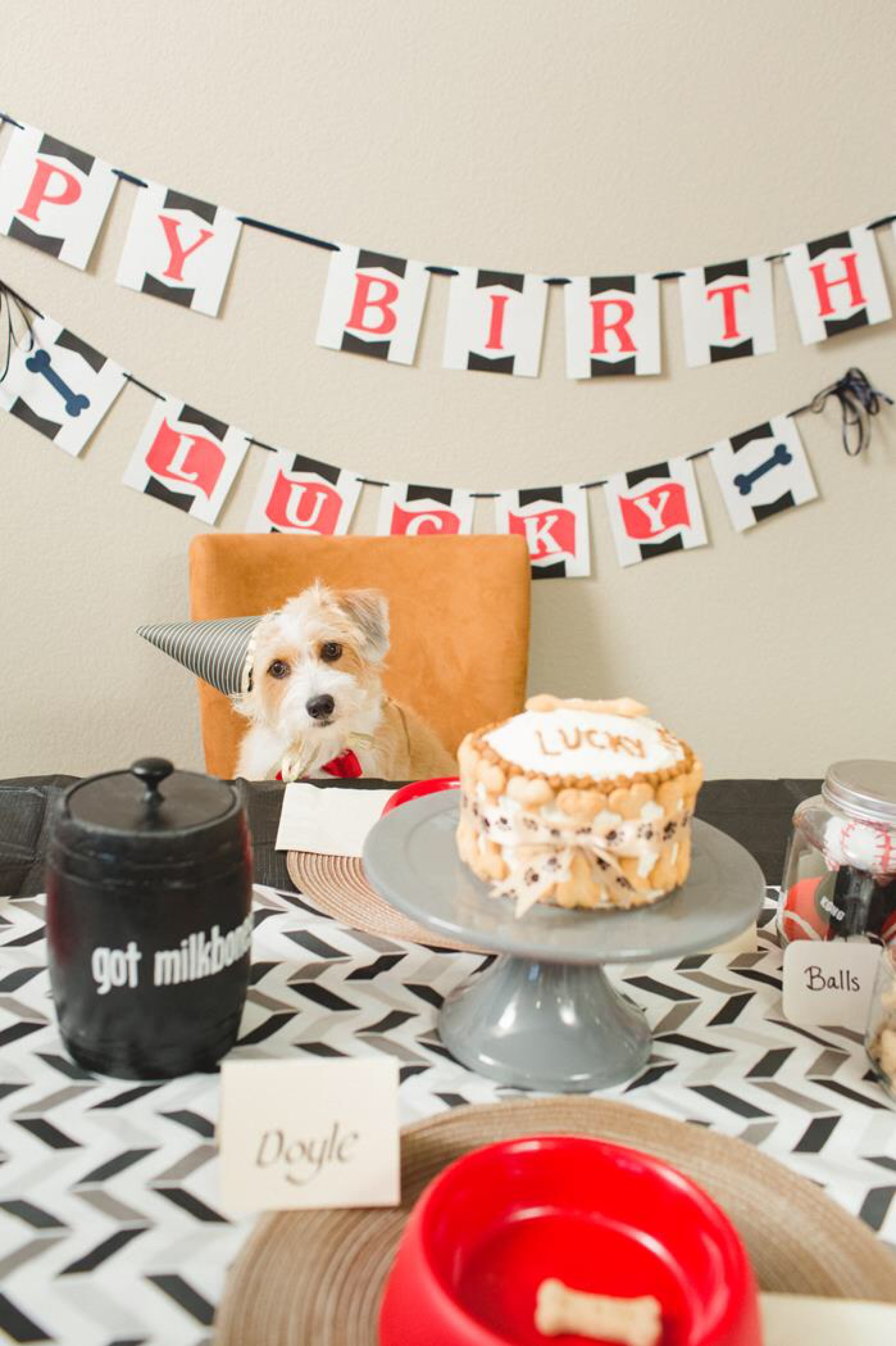 Cat And Dog Themed Birthday Party
