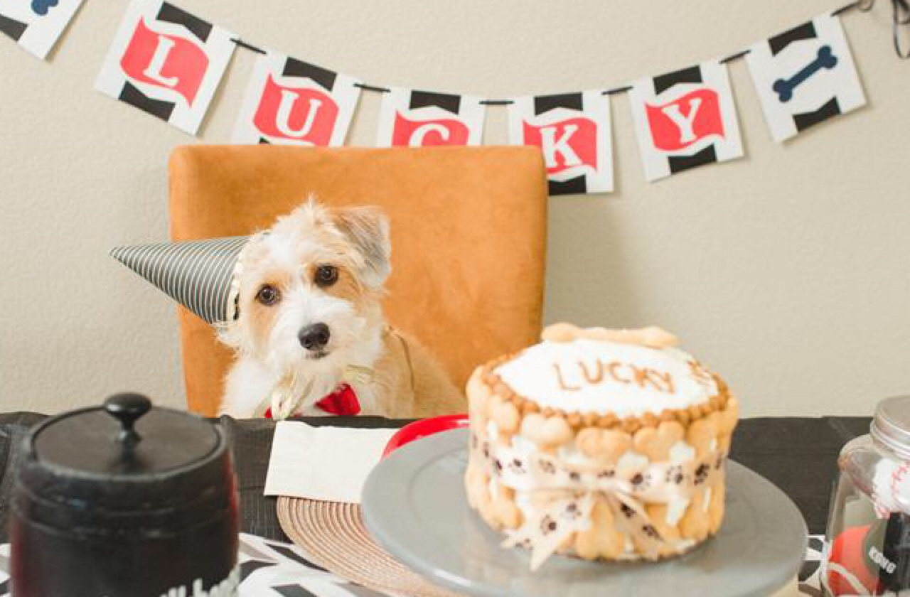 5 Dog Birthday Parties Better Than Yours Healthy Paws