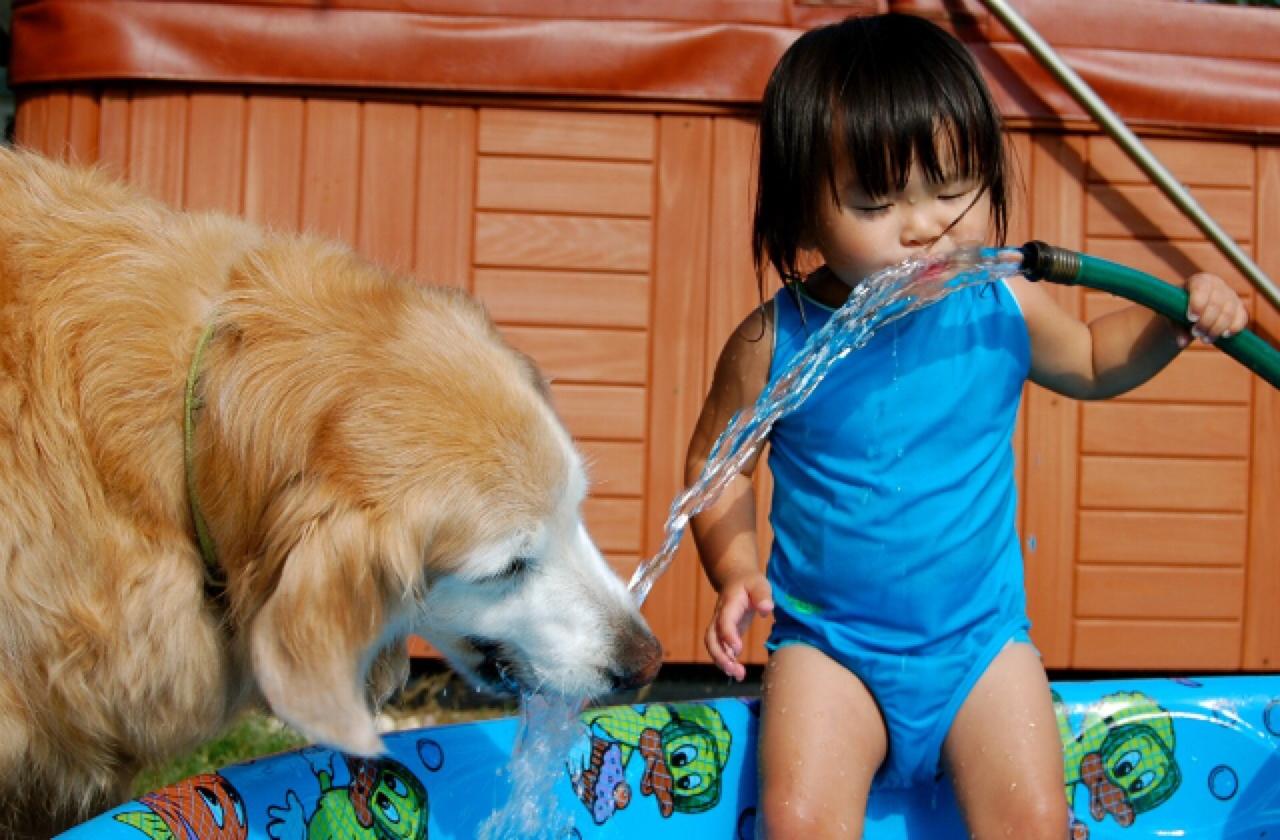 The best dog breeds for kids healthy paws - Best dog breeds kids ...