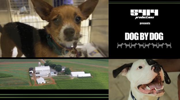 dog_by_dog_doc