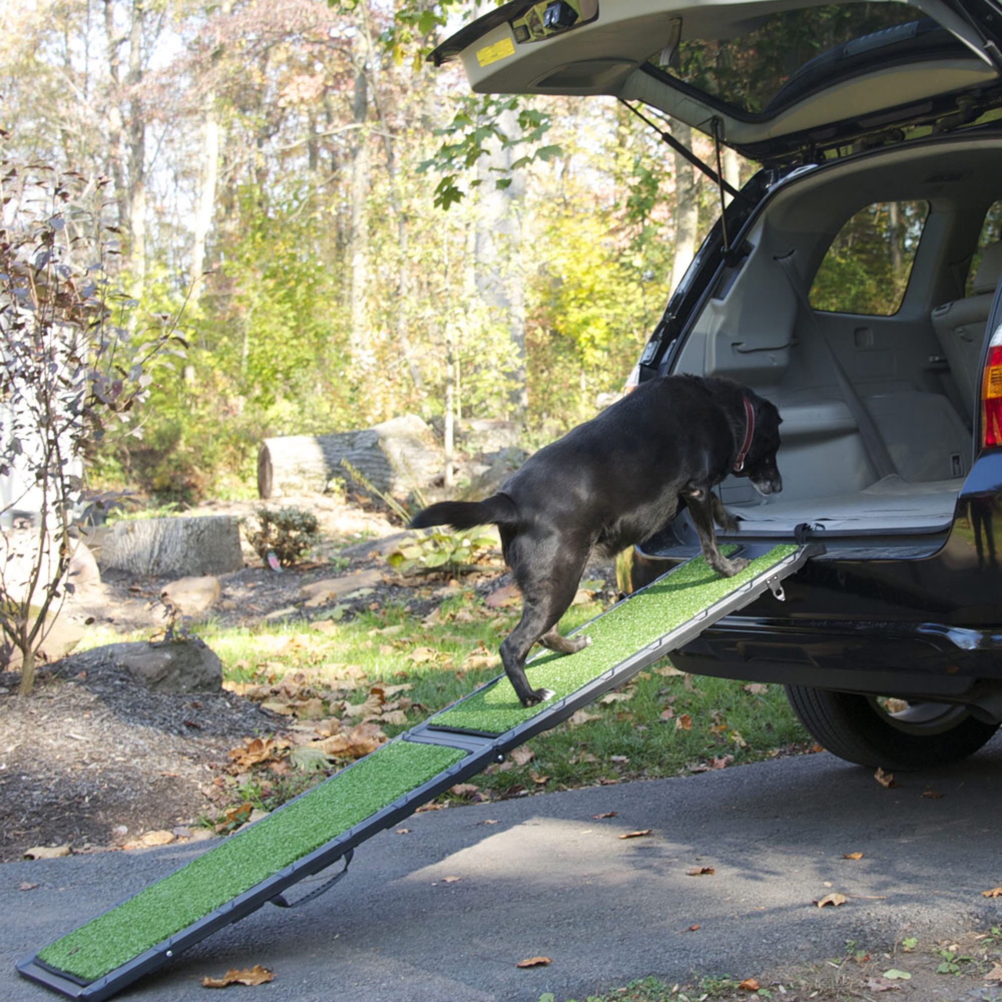 dog ramp car