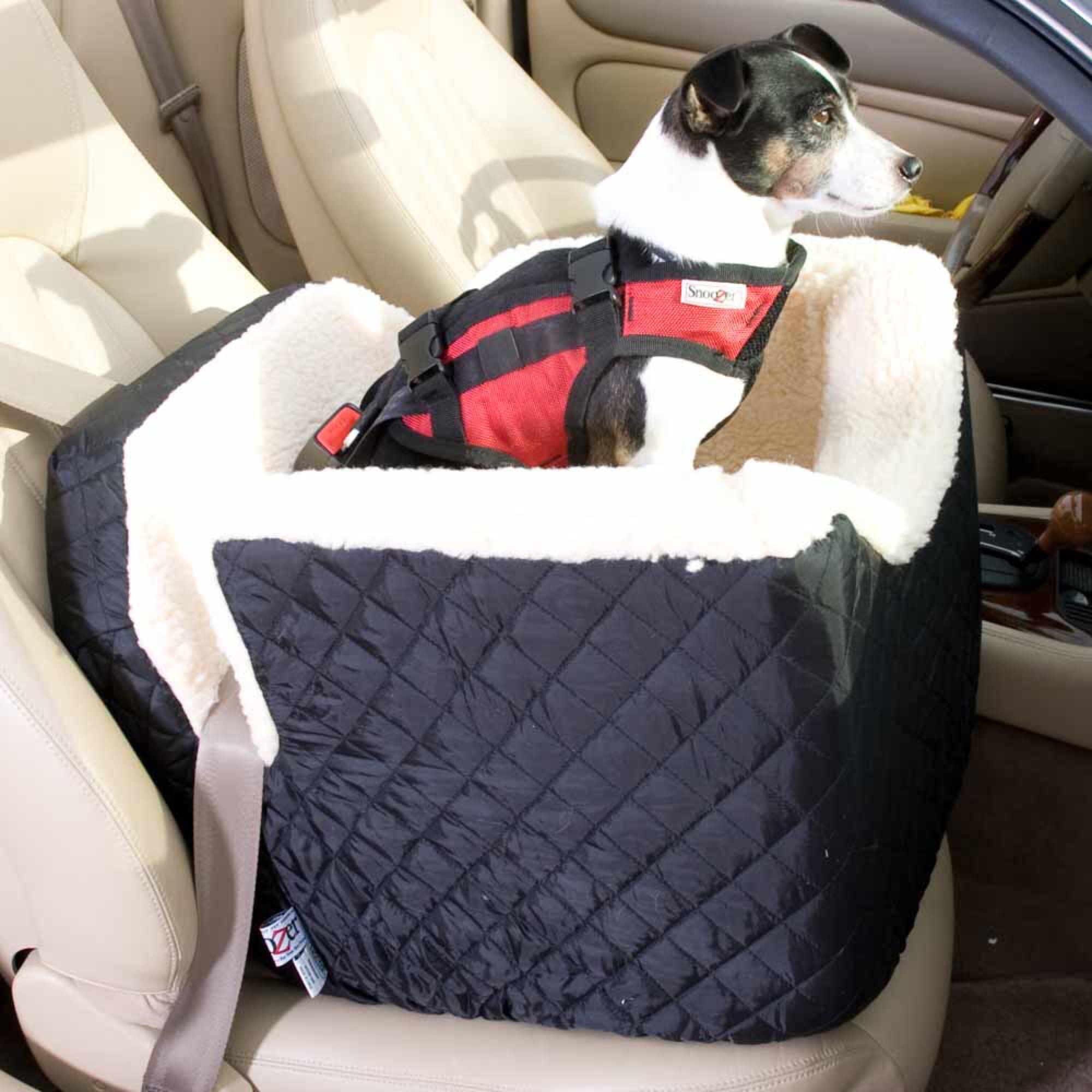 8 gadgets for a dog friendly road trip healthy paws pet insurance. Black Bedroom Furniture Sets. Home Design Ideas