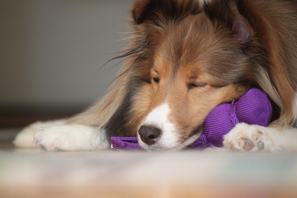 Toys To Entertain Dogs While At Work