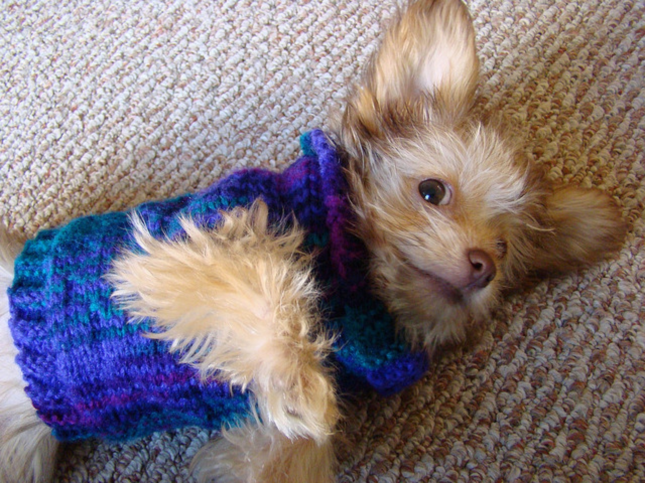 dog clothes sweater