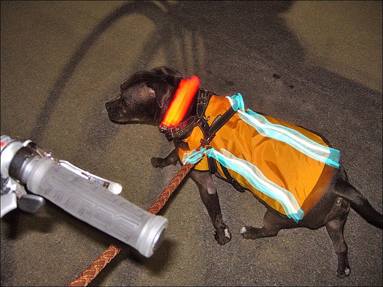 hond reflecterend vest