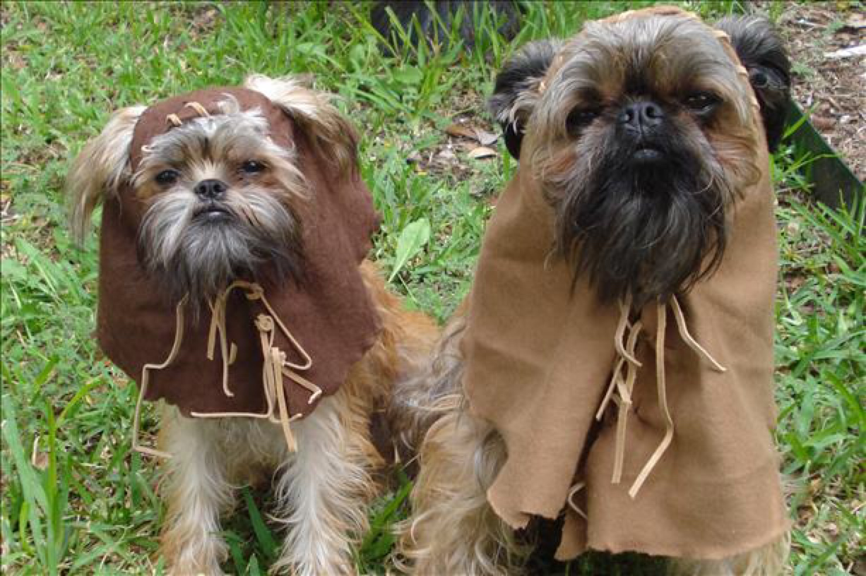 two brussels griffons who look like ewoks