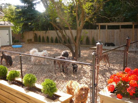 group of dogs in fenced backyard
