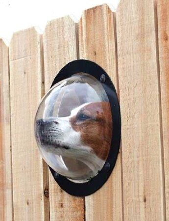 dog view window in fence
