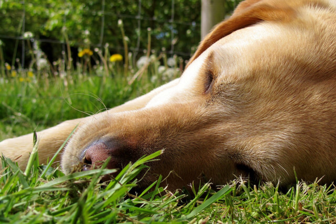 Can Dogs Get Sunburn On Their Paws