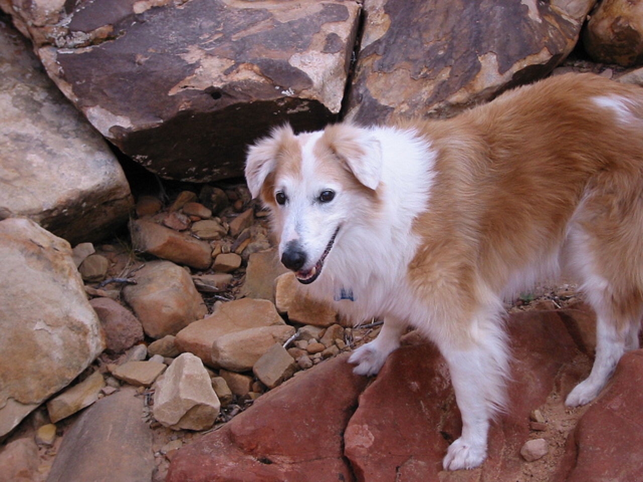 Red Rock Canyon dog friendly hiking