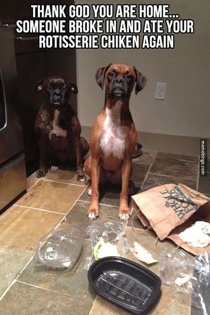 Funny Boxer Dog Meme : At home treatments for pet colds healthy paws insurance
