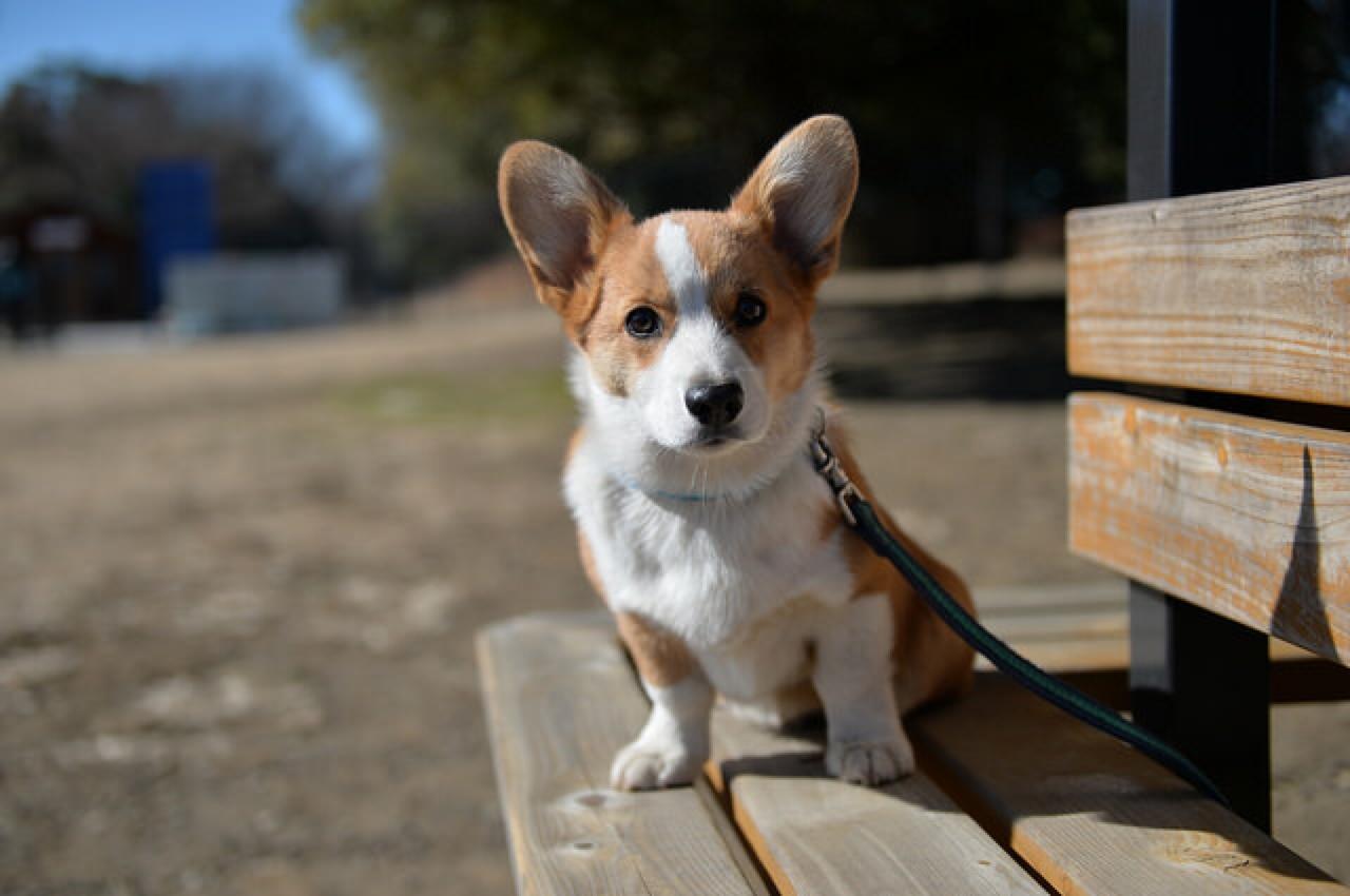 dog social anxiety