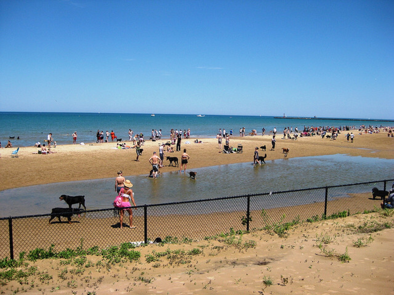 dog friendly beaches Chicago